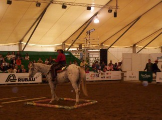 equitation western stage